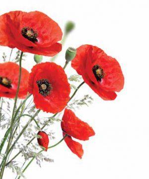 Flowers-Λουλούδια